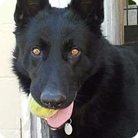 Adopt A Pet :: Tyson - South Amana, IA