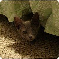 Adopt A Pet :: Grayson - Orlando, FL