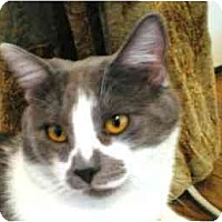 Adopt A Pet :: Irving (w/Amber) - Portland, OR