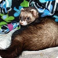 Adopt A Pet :: Cookie - Acworth, GA