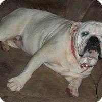 Adopt A Pet :: Gretel - Winder, GA