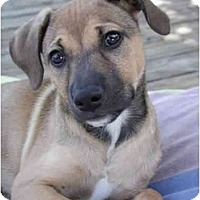 Adopt A Pet :: Hollis - Fort Lauderdale, FL