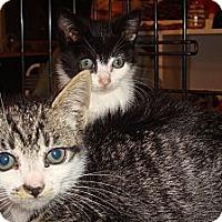 Adopt A Pet :: Marbles - Brooklyn, NY