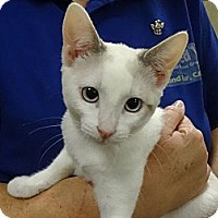 Adopt A Pet :: DIVA - Diamond Bar, CA