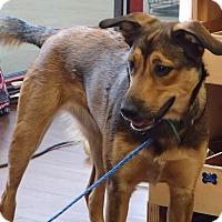 Adopt A Pet :: Marley - Pocahontas, AR