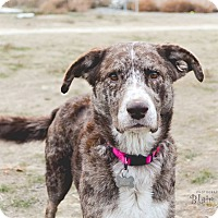 Adopt A Pet :: Willow - Seattle, WA
