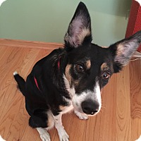 Adopt A Pet :: Punk-New Update 7/11! - Midwest (WI, IL, MN), WI
