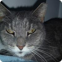 Adopt A Pet :: Molly Lee - Hamburg, NY