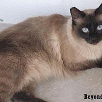 Adopt A Pet :: Beyond Silk - Fullerton, CA