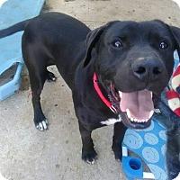 Adopt A Pet :: Grover - Springfield, MO