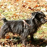 Terrier (Unknown Type, Small)/Schnauzer (Miniature) Mix Dog for adoption in Beavercreek, Ohio - Doolittle