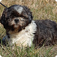 Adopt A Pet :: Buddy (13 lb) Perfect Baby! - SUSSEX, NJ