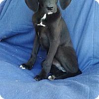 Adopt A Pet :: Heath pending adoption - Manchester, CT
