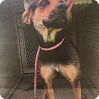 Adopt A Pet :: Adele - Salem, OR