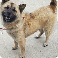 Adopt A Pet :: GangTo - Oakton, VA