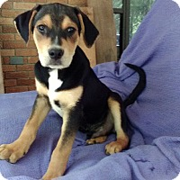 Adopt A Pet :: Thomas-pending adoption - Manchester, CT