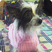 Adopt A Pet :: Daisy 2017 (m/c) - Chesterfield, MI