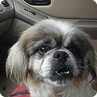 Adopt A Pet :: Toby aka Tobias - York, SC