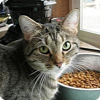 Adopt A Pet :: Monday - N. Billerica, MA