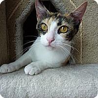 Adopt A Pet :: Bella - Madison, AL