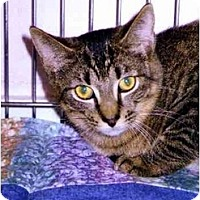 Adopt A Pet :: Dell - Medway, MA
