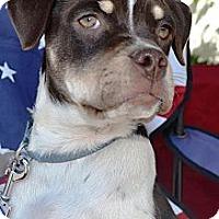 Adopt A Pet :: Shawn - kennebunkport, ME