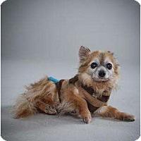 Adopt A Pet :: Elliot - Rochester, NY