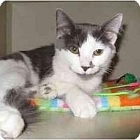 Adopt A Pet :: Lily - Mesa, AZ