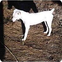Adopt A Pet :: Connie in Conroe - Houston, TX