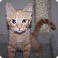 Adopt A Pet :: K-Athena1-Selene - Colorado Springs, CO