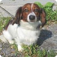 Adopt A Pet :: Benji - Cornwall, ON