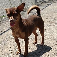 Adopt A Pet :: SERAPHINA - San Pablo, CA