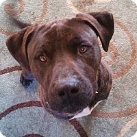 Adopt A Pet :: Gemini - North Bend, WA