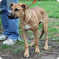 Adopt A Pet :: Sophie - Naugatuck, CT