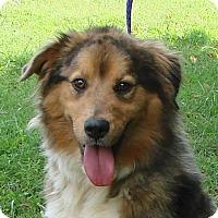 Adopt A Pet :: Sebastian - Erwin, TN