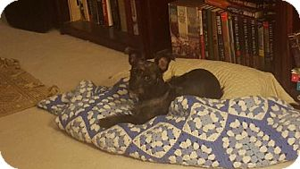 Standard Schnauzer/Cairn Terrier Mix Dog for adoption in Spring, Texas - Penelope