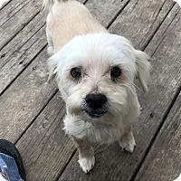 Adopt A Pet :: Charlotte - Columbus, OH