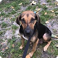 Adopt A Pet :: Jesse - Boca Raton, FL