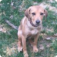 Adopt A Pet :: Charlie - Lincolnton, NC