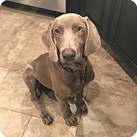 Adopt A Pet :: Navan - Denton, TX
