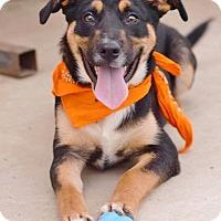 Adopt A Pet :: Jackson meet me 4/21 - Manchester, CT