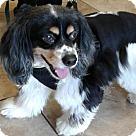 Adopt A Pet :: Chuy