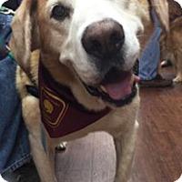 Adopt A Pet :: Eno - BIRMINGHAM, AL
