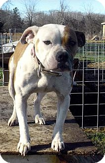 Pit Bull Terrier Mix Dog for adoption in Moulton, Alabama - Ellie