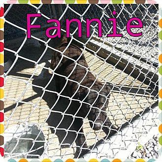 Labrador Retriever Mix Dog for adoption in Donaldsonville, Louisiana - Fannie