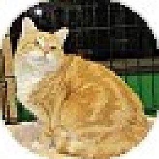 Photo 3 - Domestic Shorthair Cat for adoption in Ortonville, Michigan - Mercedes