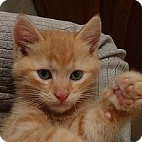 Adopt A Pet :: Dorito - East Hanover, NJ