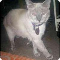 Adopt A Pet :: Peepers - Summerville, SC