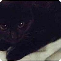 Adopt A Pet :: Wendy - Kensington, MD