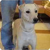 Adopt A Pet :: Catalina - Phoenix, AZ